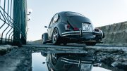beetle_web2